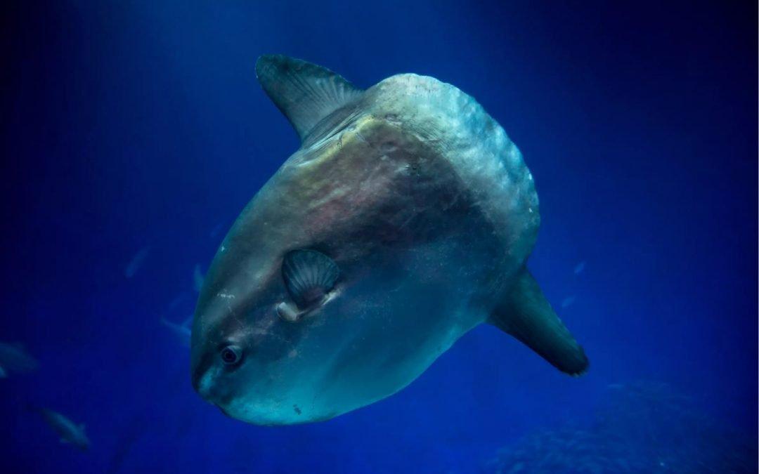 inspiration and calm: live cams at the Monterey Bay Aquarium